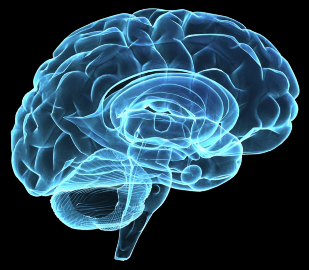 The Brain 'Rotates' Memories to Save Them From New Sensations