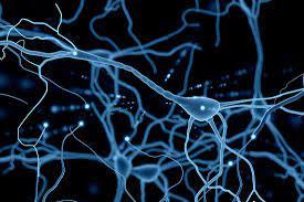 Neuroscience News Science Magazine – Research Articles – Psychology Neurology Brains AI