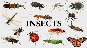 More Fun Than Fun: How Do Insect Societies Deal With Infectious Diseases?