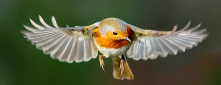 Birds Have a Mysterious 'Quantum Sense'. Scientists Have Now Seen It in Action